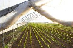 Casa verde con las verduras comestibles fotos de archivo libres de regalías