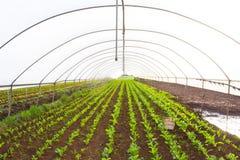 Casa verde con las verduras comestibles fotografía de archivo libre de regalías