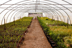 Casa verde da exploração agrícola do jardim Fotografia de Stock Royalty Free