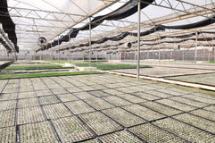 A casa verde do jardim moderno do berçário Foto de Stock