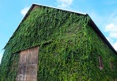 Casa verde no parque nacional, Tailândia Imagens de Stock