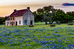 Casa vieja abandonada en Texas Wildflowers Imagen de archivo