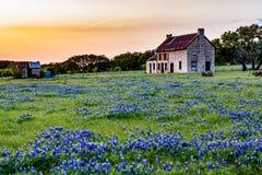 Casa vieja de Abandonded en Texas Wildflowers Foto de archivo libre de regalías