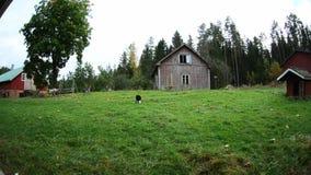 Casa vieja finlandesa en el bosque almacen de video