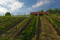 Casa vieja hermosa del vino rodeada con las colinas del viñedo Campos de la uva cerca de Wurzburg, Alemania Fotos de archivo