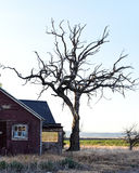 Casa vieja y árbol muerto imágenes de archivo libres de regalías