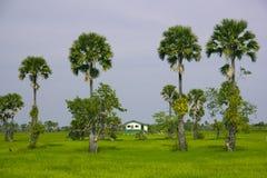 Casa y árboles Imagenes de archivo
