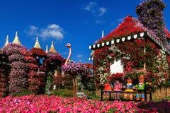 Casa y avestruz de la flor en el primero plano Imágenes de archivo libres de regalías