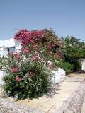 Casa y flores foto de archivo libre de regalías
