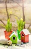 Casa y narciso verdes del pájaro en potes, pala y semillas contra jardín en primavera Imágenes de archivo libres de regalías