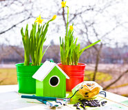 Casa y narciso verdes del pájaro en potes, pala y semillas contra jardín en primavera Imagen de archivo libre de regalías