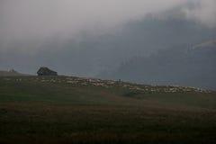 Casa y ovejas en una colina cubierta en niebla cerca de Sibiu, Rumania Imagen de archivo libre de regalías