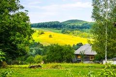 Casa y vacas en las montañas imagenes de archivo