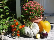 Casa: zucche e fiori dell'entrata di caduta di autunno fotografia stock