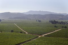 Free Casablanca Wine Valley Chile Royalty Free Stock Photos - 647308