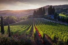Casale Marittimo, Toscanië, Italië, mening van de wijngaard op sept. stock foto