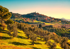 Casale Marittimo village and olive trees in Maremma. Tuscany, It Stock Photo