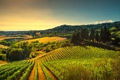 Casale Marittimo wioska, winnicy i krajobraz w Maremma, Tu Zdjęcia Royalty Free