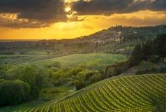 Casale Marittimo wioska, winnicy i krajobraz w Maremma, Tu Obraz Royalty Free