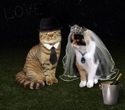 Casamento 1 do gato imagens de stock royalty free