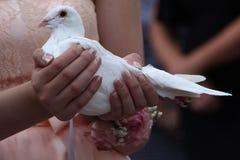 Casarse la paloma Foto de archivo