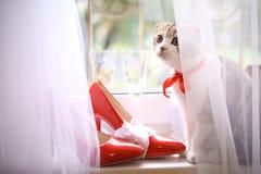 Casarse los zapatos de tacón alto del charol rojo nupcial con los anillos y las copas de vino Imagen de archivo