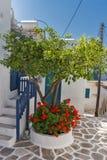 Casas blancas con las flores en la ciudad de Parakia, isla de Paros, Grecia imágenes de archivo libres de regalías