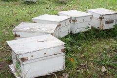 Casas de abeja Imagenes de archivo