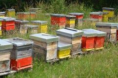 Casas de abeja de Colorfull Imágenes de archivo libres de regalías