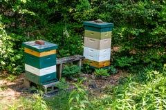 Casas de abeja de madera Fotos de archivo