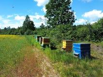 Casas de abeja en campo verde Fotografía de archivo