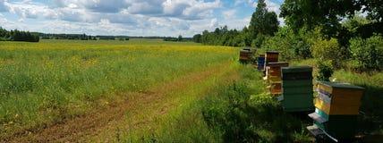 Casas de abeja en campo verde Fotografía de archivo libre de regalías