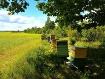 Casas de abeja en campo verde Foto de archivo libre de regalías