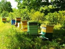 Casas de abeja en campo verde Imágenes de archivo libres de regalías
