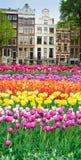 Casas de Amstardam, Países Bajos imágenes de archivo libres de regalías