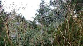Casas de arañas Fotos de archivo libres de regalías