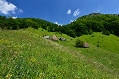 Casas de madera con los tejados cubiertos con paja cerca del bosque Fotografía de archivo libre de regalías
