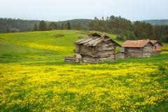 Casas de madera viejas en el campo de flor foto de archivo