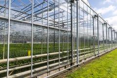 Casas de vidro em Westland holandês Fotos de Stock Royalty Free