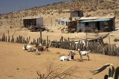 Casas deficientes no deserto Imagem de Stock