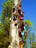 Casas del pájaro en árbol Foto de archivo