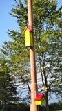 Casas do pássaro Foto de Stock