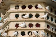 Casas do pombo imagens de stock royalty free