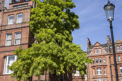 Casas em Londres, tijolos vermelhos imagem de stock royalty free