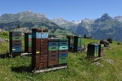 Casas para la apicultura y la producción de miel sobre Engelberg fotografía de archivo