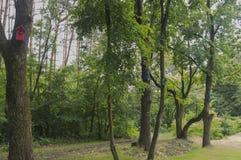 Casas para los pájaros en árboles Fotos de archivo libres de regalías