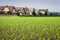 Casas que limitam colheitas de fileira Fotografia de Stock Royalty Free