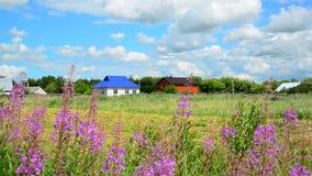 Casas rurales contra el fondo de wildflowers en verano Rusia almacen de video