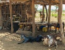 Casas tsemay tradicionales Valle de Omo etiopía Imagen de archivo libre de regalías