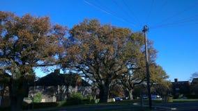 Casas y árboles en campo Imagen de archivo libre de regalías